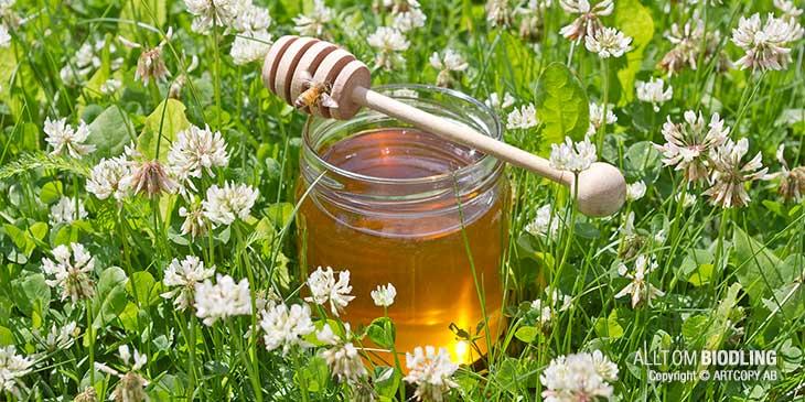 Information om honung