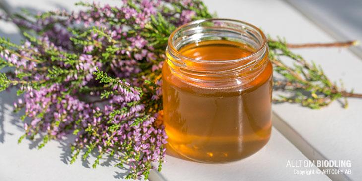 Honungens medicinska egenskaper